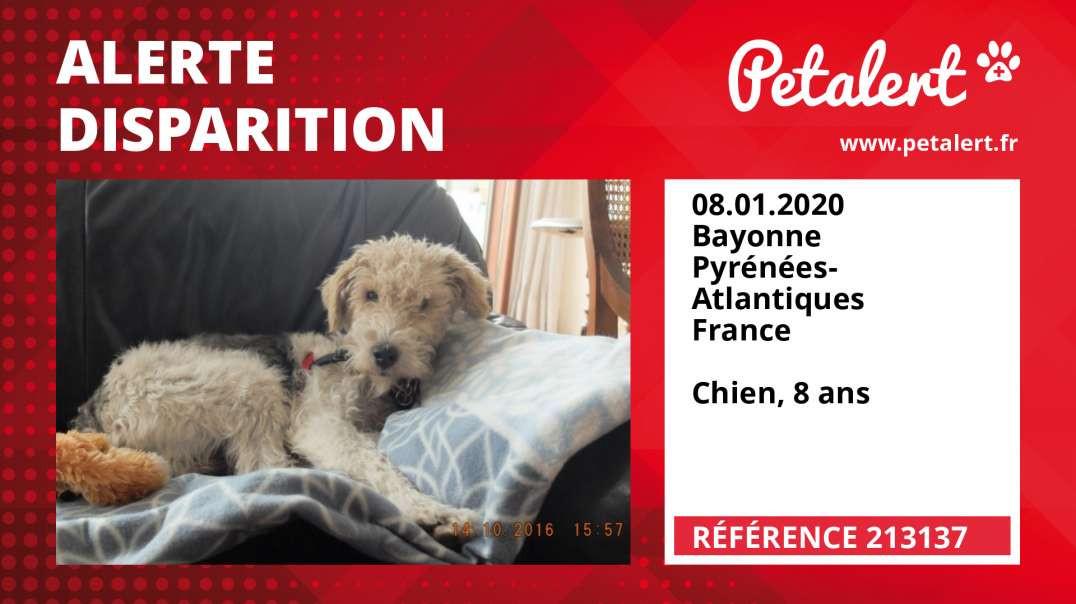 Alerte Disparition #213137 Bayonne / Pyrénées-Atlantiques / France