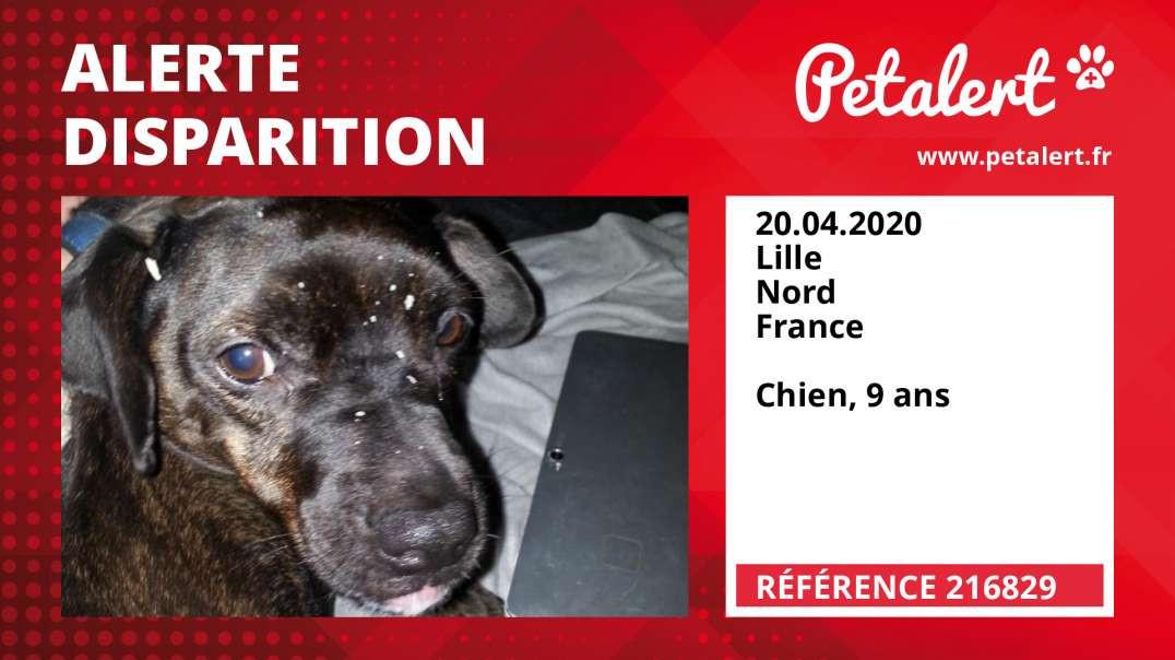 Alerte Disparition #216829 Lille / Nord / France