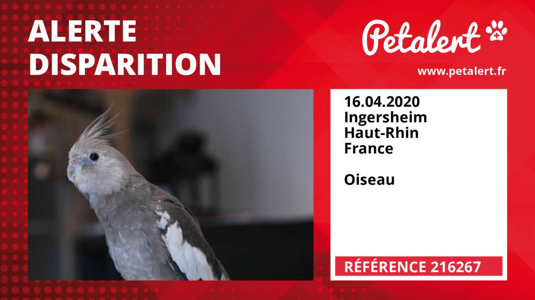 Alerte Disparition #216267 Ingersheim / Haut-Rhin / France