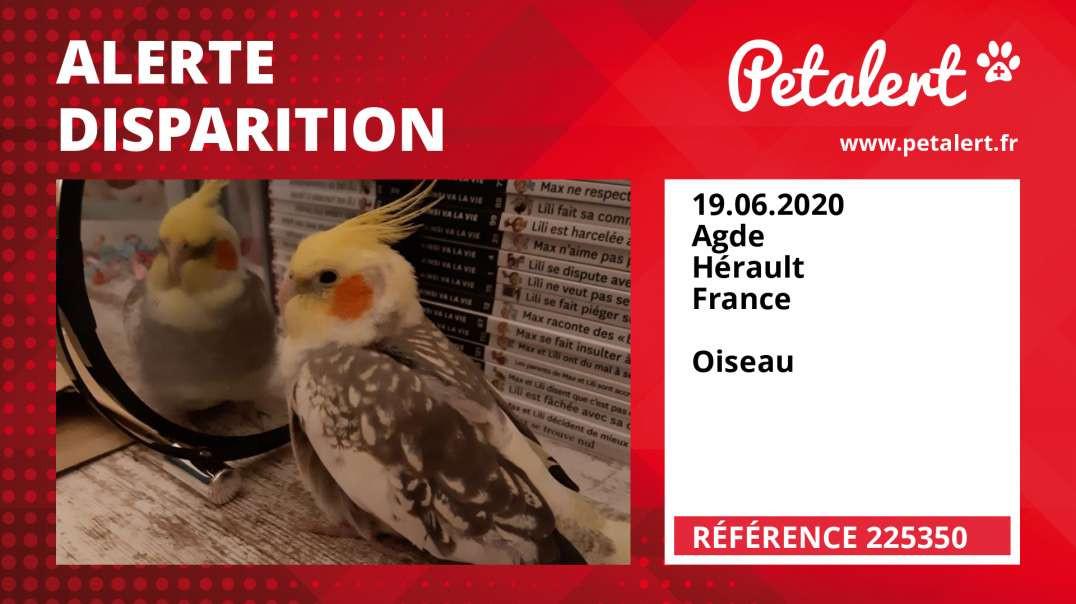 Alerte Disparition #225350 Agde / Hérault / France