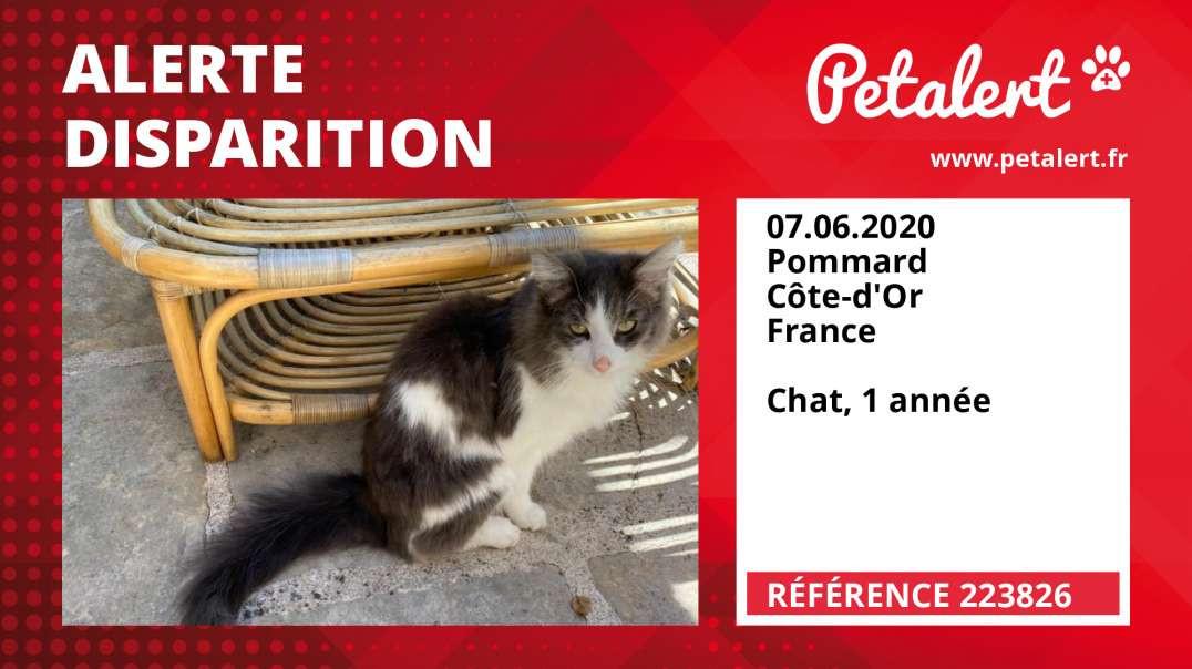 Alerte Disparition #223826 Pommard / Côte-d'Or / France