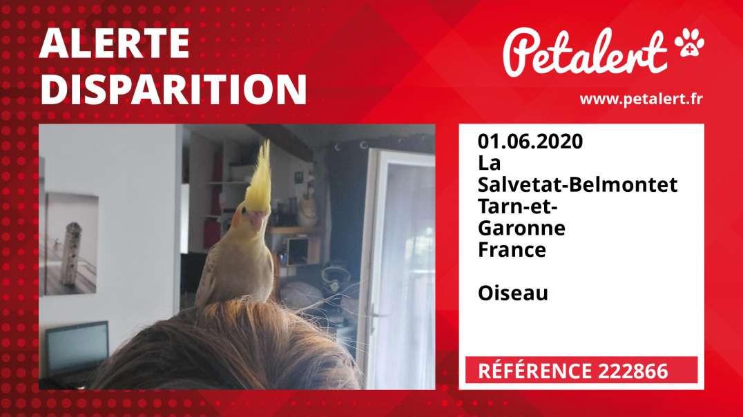 Alerte Disparition #222866 La Salvetat-Belmontet / Tarn-et-Garonne / France