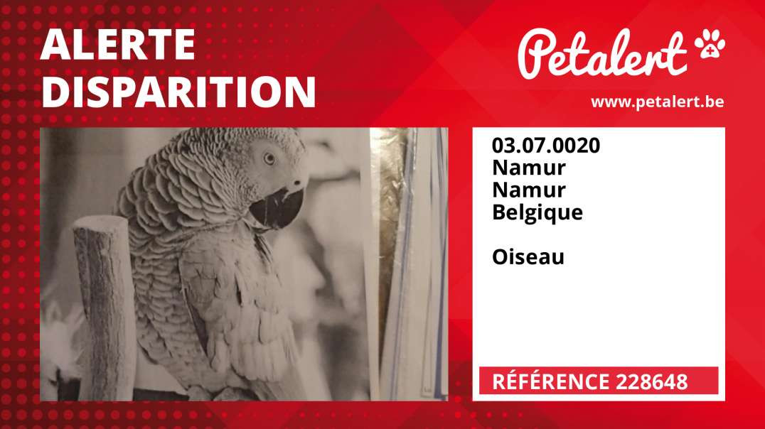 Alerte Disparition #228648 Namur / Namur / Belgique