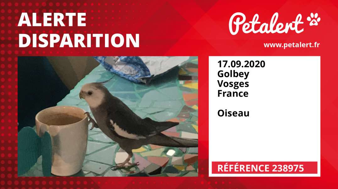 Alerte Disparition #238975 Golbey / Vosges / France