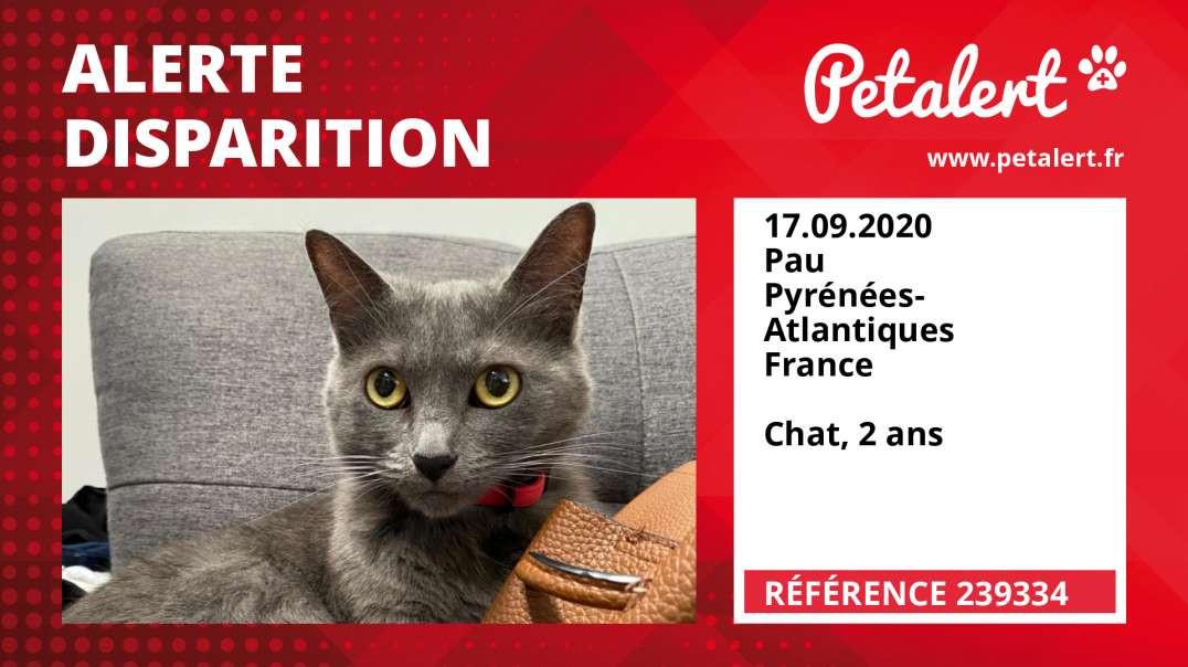 Alerte Disparition #239334 Pau / Pyrénées-Atlantiques / France